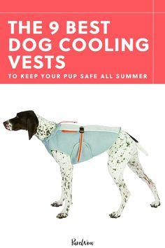 Using evaporative technology, sun-reflecting material or water to keep Fido's body temp from skyrocketing, these nine vests are the easiest way to prevent him from overheating on all your adventures. #dog #cooling #vest Dog Cooling Vest, Dog Food Delivery, Weekend Camping Trip, Cool Coats, Walking In Nature, Four Legged, Best Dogs, Your Dog, Pup