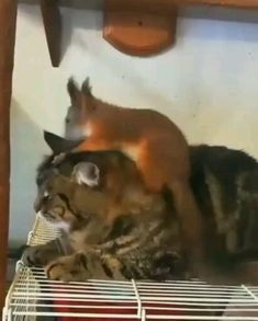 Cat and Squirrel are best friends- Cat and Squirrel are best friends FunpetAZ Funpetaz Cute Animal Videos Unexpected friendship Cute Cat Gif, Cute Cats, Funny Cats, Cute Animal Videos, Funny Animal Pictures, Cute Little Animals, Cute Funny Animals, Cute Squirrel, Squirrel Video
