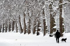 Hyde Park in Winter