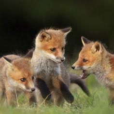 On vous souhaite une bonne semaine sur #NatGeoWild #wild #wildlife #nature…