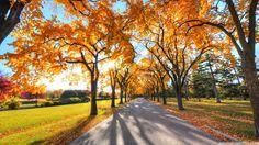 Dreamed autumn :3
