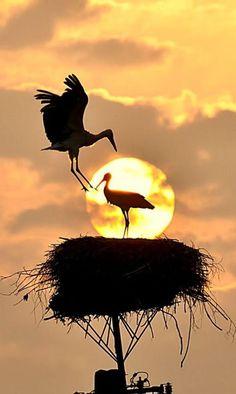 Storks nesting! :)