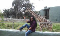 Zoológico Guadalajara, visitando a las jirafas...