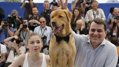 'White God' wins 'Un Certain Regard' prize at Cannes White God, Cannes, Labrador Retriever, Dogs, Movies, Animals, Labrador Retrievers, Animales, Films