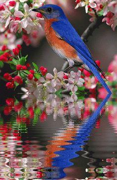 =◕✿ Nosso Maná Diário.◕✿=: Deus pode morar em qualquer lugar do universo