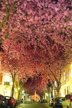 2. Street in Bonn, Germany - 20 Magical Tree Tunnels You Should Definitely Take A Walk Through  Germany  Acceda al sitio para obtener información   https://storelatina.com/germany/travelling #viajem #traveling #germanytravel #viagemalemanha