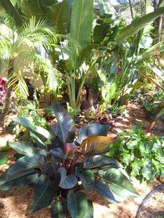 Miami Home shade tolerant plants Design Ideas, Pictures, Remodel and Decor