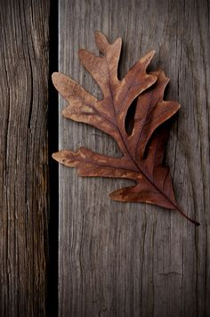 leaves  http://www.pinterest.com/pin/461056080576519030/