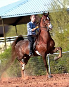 Undulata's Mister Machine actually my friends mom just got this horse he's huge^^^ He looks ginormous! Thoroughbred Horse, Appaloosa Horses, Most Beautiful Animals, Beautiful Horses, Beautiful Gorgeous, Medan, Horse Saddles, Western Saddles, Horse Facts