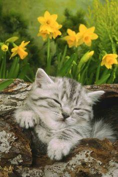 Kitties can sleep anywhere!