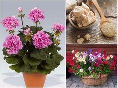 Öntözés előtt szórjunk egy kiskanál cukrot a virágföld tetejére! - Filantropikum.com