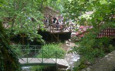 Permaculture, Garden Bridge, Aquarium, Greece, Outdoor Structures, Cabin, House Styles, Plants, Home Decor