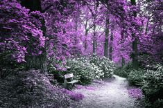 To Blend With Nature. In A Dream Photograph by Jenny Rainbow Art Prints For Home, Fine Art Prints, Fine Art Photography, Fine Art America, Rainbow, Wall Art, Purple, Nature, Color