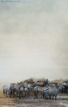 "earth-song:  ""Dusty Crossing"" by Gerry Van der Walt"