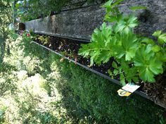 Attach rain gutters to the outside of deck rails for an extra herb garden and assorted small plants. I love this idea! Totally doing this when my new deck gets built in the spring. Gutter Garden, Herb Garden, Garden Inspiration, Garden Ideas, New Deck, Deck Railings, Decks And Porches, Small Plants, Dream Garden