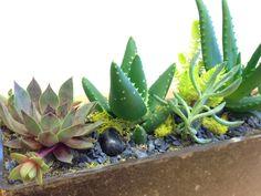 Hause of M terrarium gifts & parties - succulents