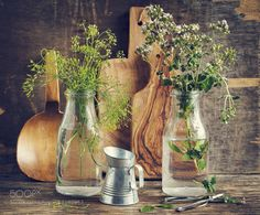 Flowers of oregano and green dill. by anjelagr