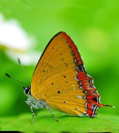 .extreme split complement Orange Butterfly, Butterfly Flowers, Beautiful Butterflies, Split Complementary, Color Harmony, Moth, Leaves, Animals, Lady Bugs