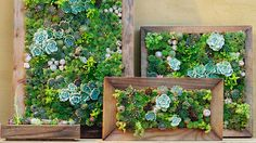 Excellent Decoration Living Wall Art How To Make Vertical Succulent Gardens Sunset