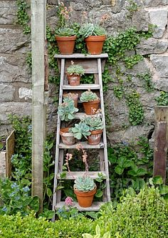 An old ladder propped against a wall - used to hold small plants.