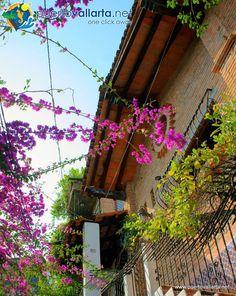 Photos/Views/images of downtown Puerto Vallarta, more: http://www.puertovallarta.net/what_to_do/down_town.php Fotos/Vistas/Imágenes del centro de Puerto Vallarta, más: http://www.puertovallarta.net/espanol/que-hacer/pueblo.php #puertovallarta #vallarta #centro #downtown #jalisco #mexico
