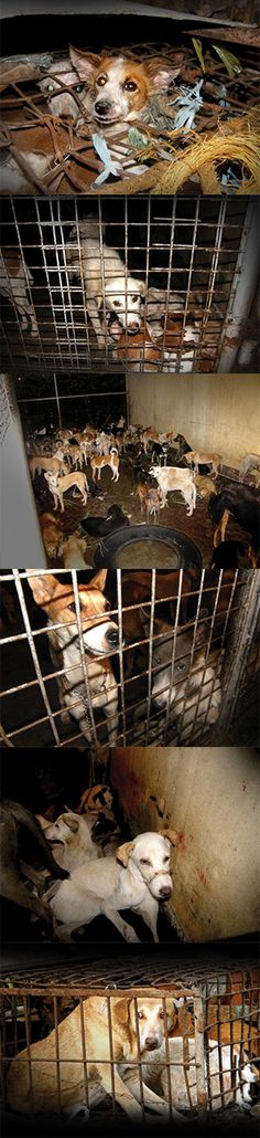 Network For Animals/PLEASE SIGN N SHARE TO STOP DOGMEAT TRADE