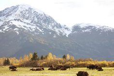 2. Alaska Wildlife Conservation Center