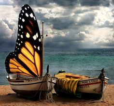 Butterfly sail. My heart just skipped a beat!