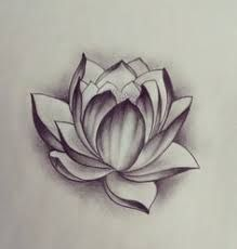 Risultati immagini per realistic lotus flower drawings