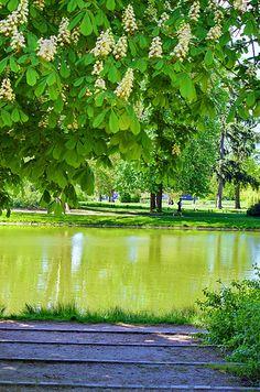 Paris, dans le Bois de Vincennes 172