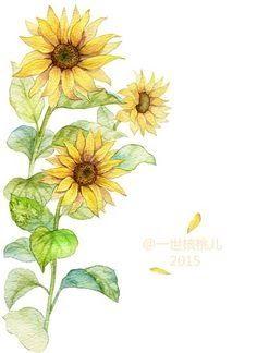 17 Gambar Bunga Matahari Beserta Bagiannya 72 Best Bunga Matahari Images Sunflower Drawing Sunflower Download Bunga Mat Di 2020 Bunga Cat Air Bunga Matahari Bunga