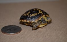apan3 Interesting Blogs, Turtle, Animals, Tortoise, Animaux, Animal, Animales, Turtles, Sea Turtles