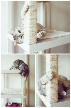 Un arbre à chat à fabriquer soi-même