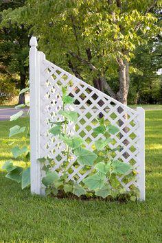 How to build a simple corner trellis ~ Bonnie Plants