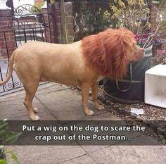 Lion no doggy
