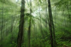 15. Sunlight beaming through the green, misty forest in Rider Park, Lycoming County.