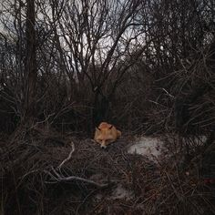 Photographing the Foxes of New Jersey's Island Beach State Park Island Beach State Park, Instagram Blog, Instagram Posts, Fantastic Fox, A Kind Of Magic, Prince, Forest Path, The Dunes, Nature Photos