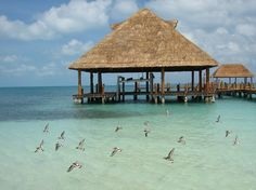 Cancun Pictures - Traveler Photos of Cancun, Quintana Roo - TripAdvisor