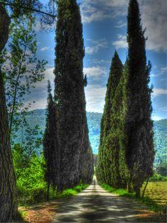 Cortona - Cipressi