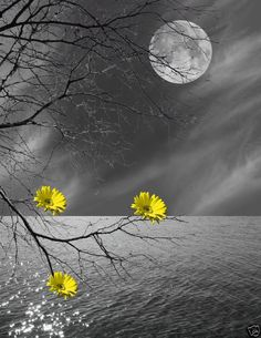 black and white pictures with a splash of yellow Splash Photography, Moon Photography, Moon Photos, Moon Pictures, Color Splash, Color Pop, Colour, Shoot The Moon, Sunflower Art