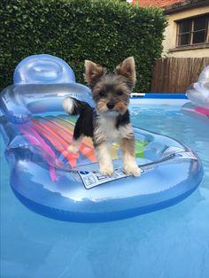 Hunde Foto: Cécile und Julie - Ich bleib lieber im Trockenen❤️ Hier Dein Bild hochladen: http://ichliebehunde.com/hund-des-tages  #hund #hunde #hundebild #hundebilder #dog #dogs #dogfun  #dogpic #dogpictures
