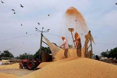 Millers are ready to import wheat  of 8.25 lakh tonnes this yr - http://tradeexim.com/millers-ready-import-wheat-8-25-lakh-tonnes-yr/