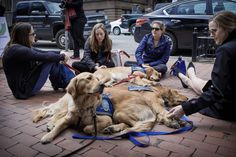 Dogs being used to comfort those who need it, here in Boston<3  This is so unbelievably poignant