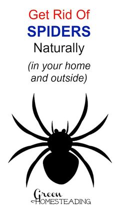 1000 images about bra tips insekter on pinterest for How to get rid of spiders in the house uk