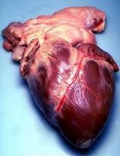 Working better and better: Statistically, our hearts are getting better and better. The rate of heart-related deaths is dropping faster than...