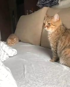Play with me mom - your daily dose of funny cats - cute kittens - pet memes - pets in clothes - kitty breeds - sweet animal pictures - perfect photos for cat moms Cute Kittens, Funny Cute Cats, Cute Baby Cats, Cute Little Animals, Cute Funny Animals, Baby Kitty, Ragdoll Kittens, Kittens Playing, Funny Cat Faces