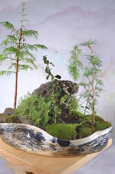 Nice indoor miniature gardens at this site.