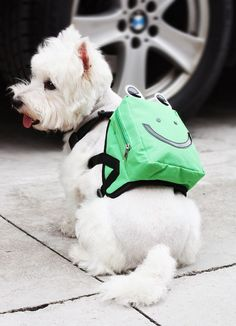 Perro con mochila .Dog wearing a bag. fashion dog