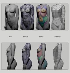 Female Torso by Anatomy from Sculptors Anatomy Study, Body Anatomy, Anatomy Art, Human Anatomy, Human Reference, Figure Drawing Reference, Anatomy Reference, Zbrush, Anatomy Sketches