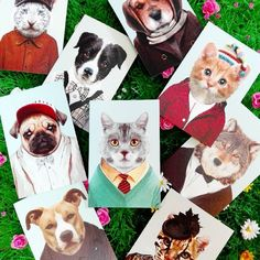 It's raining cats and dogs! #cats #dogs #rain #badweather #rainyday #expression #rainingcatsanddogs  #catsagram #catsofinstagram #dogs #postcards #animals #cute #havingfun #hetregent #livinglounge